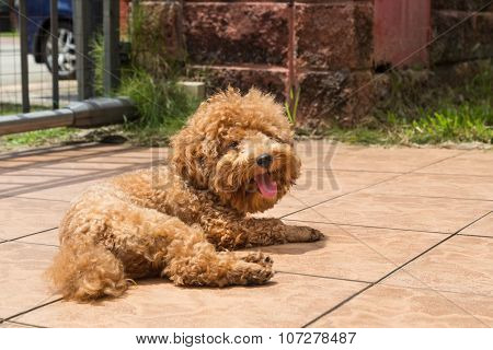 Dog Sun Bathing As Therapy To Relieve Itchy Skin