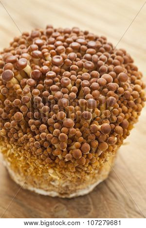 Bunch of cultivated golden Enoki mushrooms