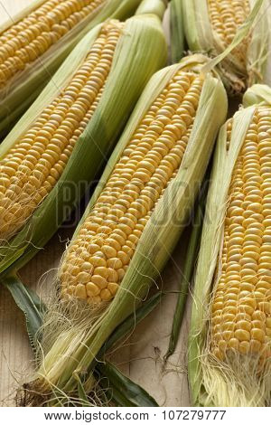 Fresh raw yellow corn on the cob