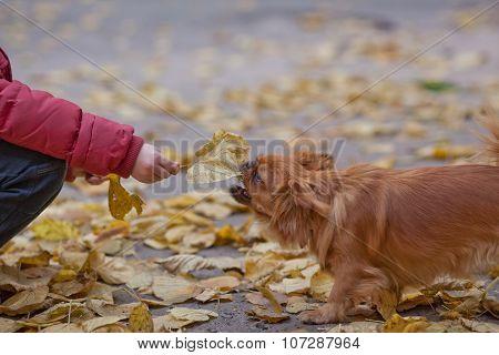 Teasing A Pet