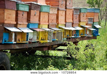 Bee hives in countryside
