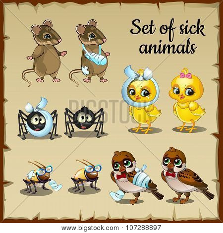 Sick and healthy animals complaints