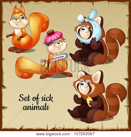 Sick and healthy squirrel and raccoon