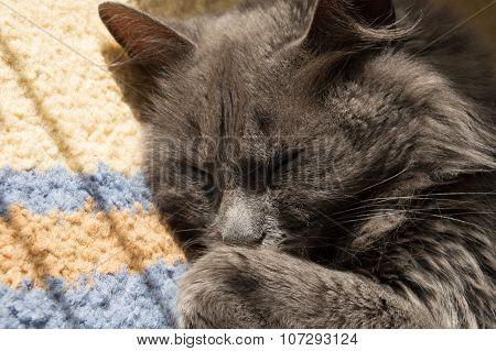 Beautiful Gray Cat Sleeping On The Floor