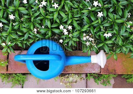 Blue water can/pot on top view near white flowers in flowerbed with red brick border