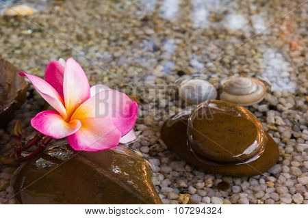Touching nature with relaxing and peaceful with flower plumeria or frangipani decorated on water and