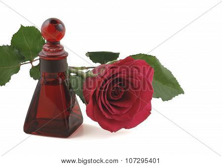 Aromatherapy Essential Oil of Rose