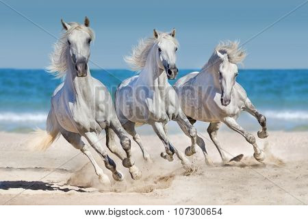 Horses run near the ocean