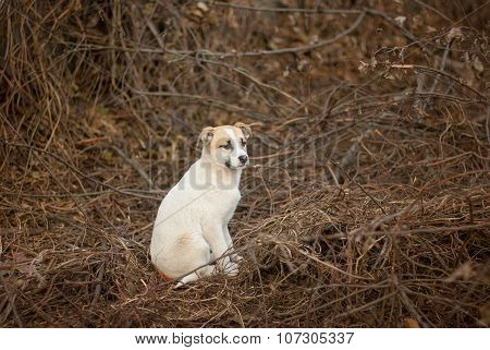 Brave stray puppy sitting in sinister place