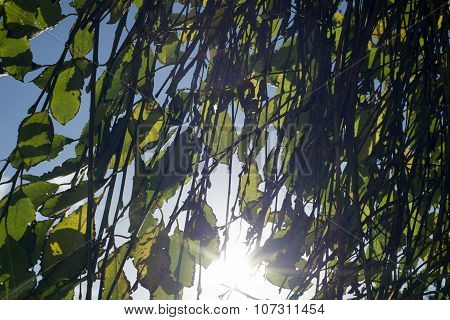 sunlight through the branches and leaves