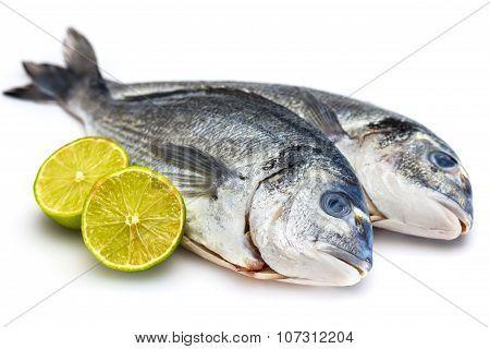 Bream Fish With Lime Isolated On White Background