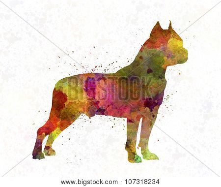 American Staffordshire Terrier In Watercolor