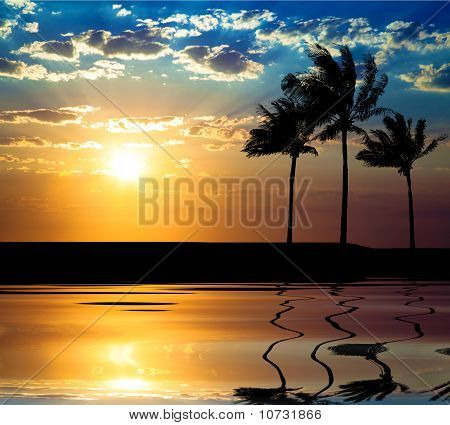 Beautiful sunet with palm tree