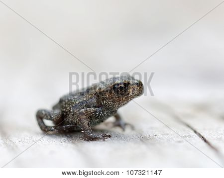 Baby Frog Side View
