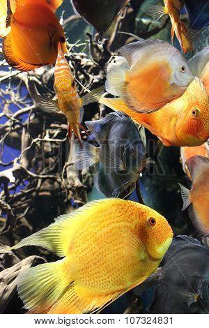 tropical fish that swims in the marine aquarium