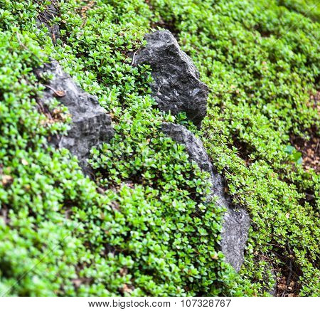 Lush Vegetation On The Green Mountainside