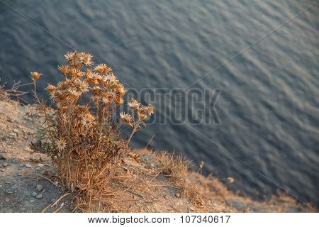 Prickly Plant On The Edge Of The Cliff