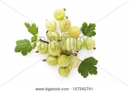 Green Gooseberries.