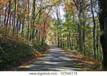 Autumn Dappled Lane