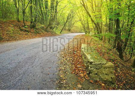 Asphalt Road In Autumn Forest.