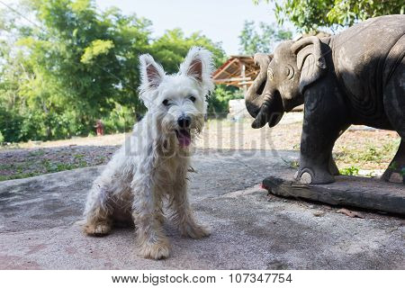 Lovely and happy dirty miniature schnauzer dog smiling happily
