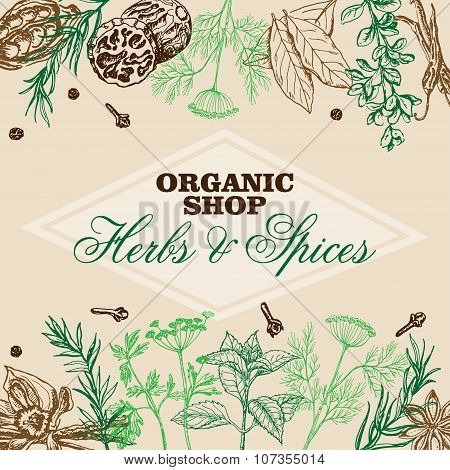 Vector background with spices and herbs