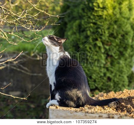 Cat Sniffing A Branch