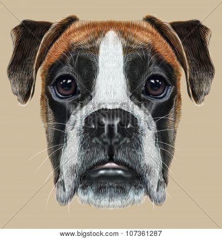 Illustrated Portrait of Boxer dog on beige background.