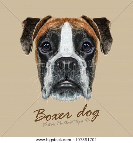Vector Illustrated Portrait of Boxer dog on blue background.