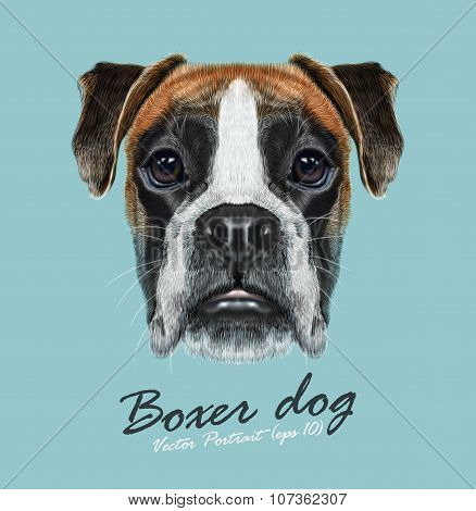 Vector Illustrated Portrait of Boxer dog on blue background