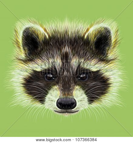Illustrated Portrait Of Raccoon On Green Background