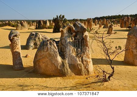 Pinnacle Desert Formations: Nambung National Park, Western Australia