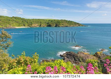 Salcombe Devon coast England uk in summer with pink flowers