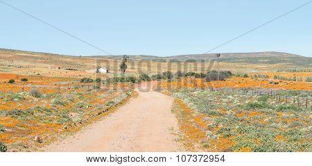 Flower Landscape Near Garies