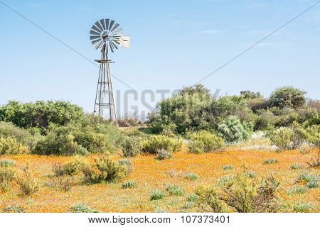 Windmill And Wild Flowers At Skilpad