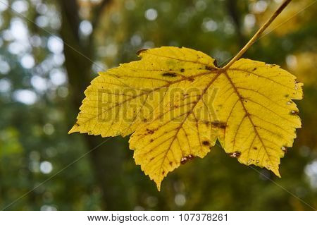 Close up of the surface of a leaf in autumn