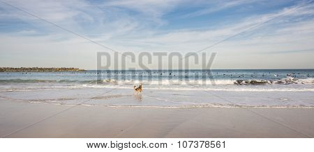 Surfers and dog in the Beach of San Sebastian