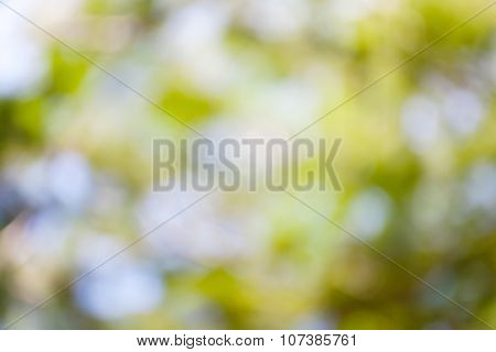 Natural Green Tree Bokeh Blurred Background.