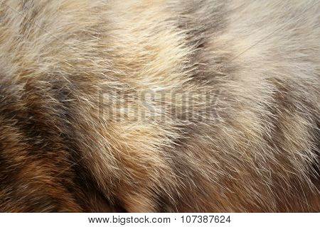 Background Of Fur Cat At The Park