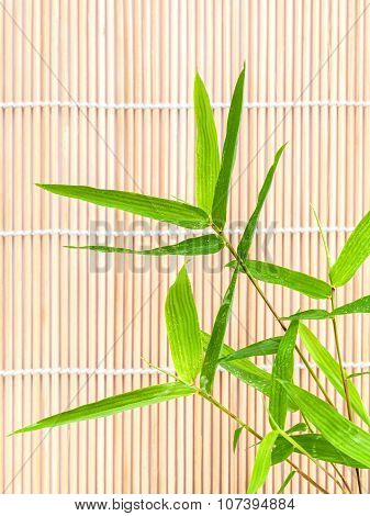 Fresh bamboo leaves border with water drop  on bamboo background botanical zen forest tropical spa
