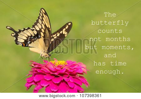 The butterfly counts not months but moments, and has time enough - quote with a Giant Swallowtail butterfly on a pink Zinnia