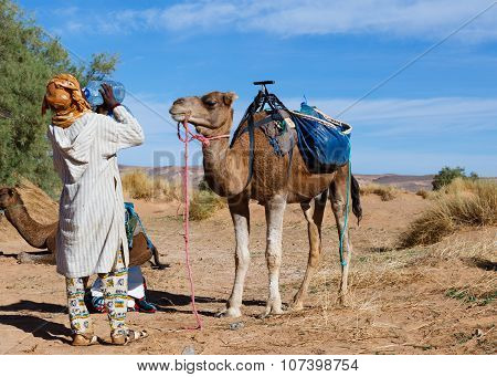 camel and Berber drinking water