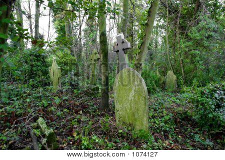 Overgrown Grave Yard