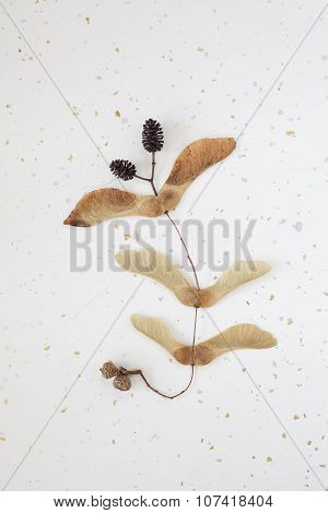 Pattern of Autumn Seeds