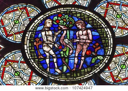 Adam Eve Stained Glass Notre Dame Cathedral Paris France
