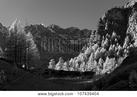 Mountain Landscape With Larches Version Infrared Rays