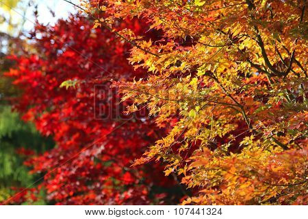 Bright Autumn Branches