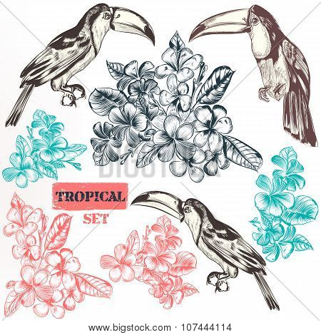 Vector Collection Of Three Toucan Bird Fully Hand Drawn In Vintage Engraved Style