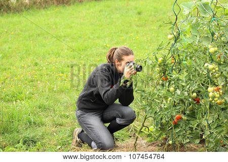 Girl Taking Close-up Photo Of Tomatoe Plant