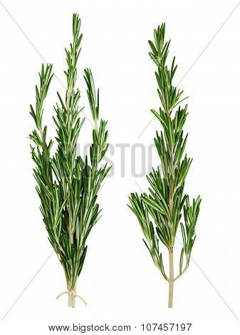Two fresh green sprigs of rosemary